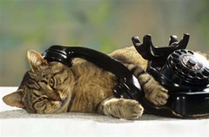 Kot przy telefonie